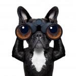 Eye Tracking – Ich schau' dir in die Augen, Kunde