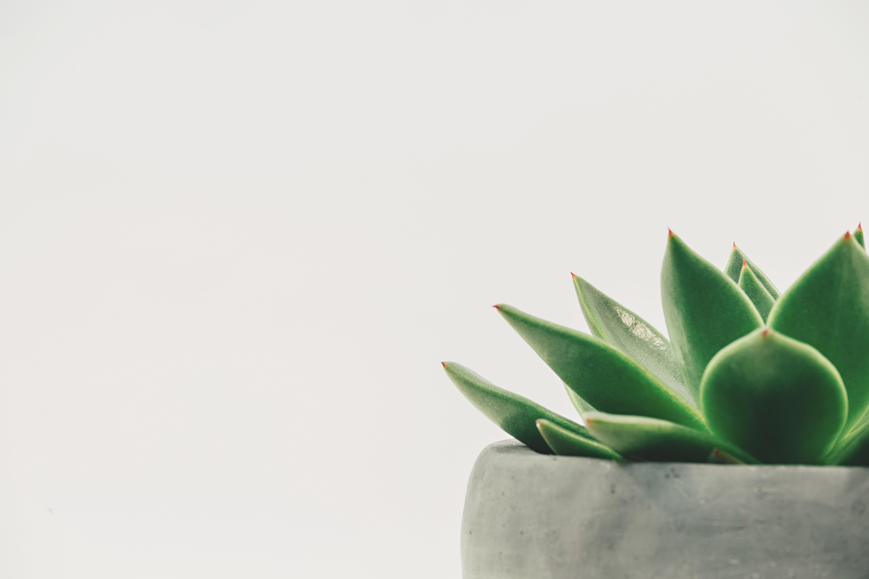 Nachaltigkeit in der Kosmetikbranche - Aloe Vera